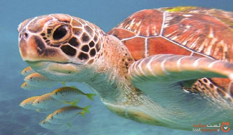 لاکپشت های دریایی