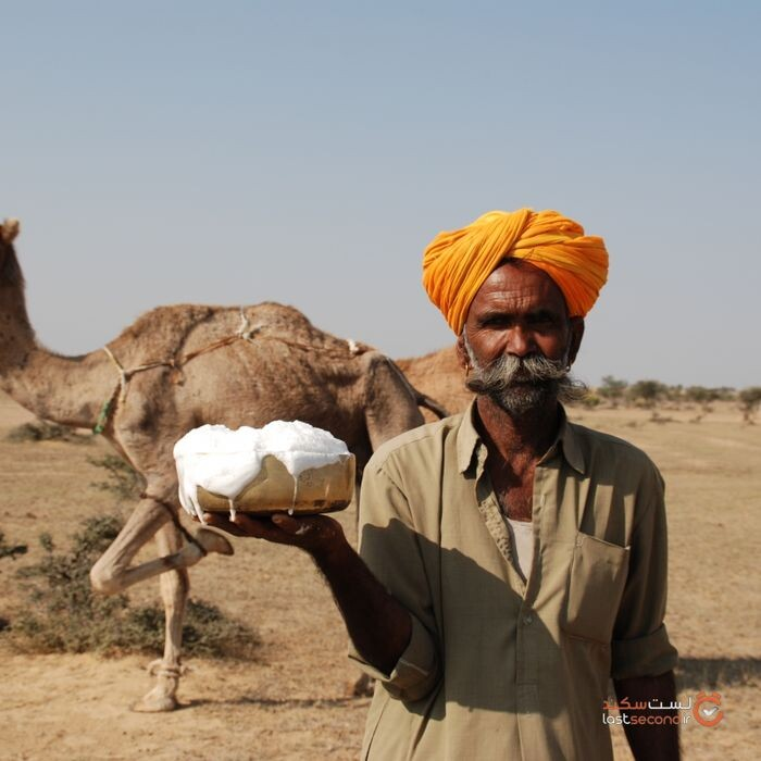Camel milk, known as white gold of the desert, was traditionally not sold but is now the only economic rationale for camel breeding_0.jpg