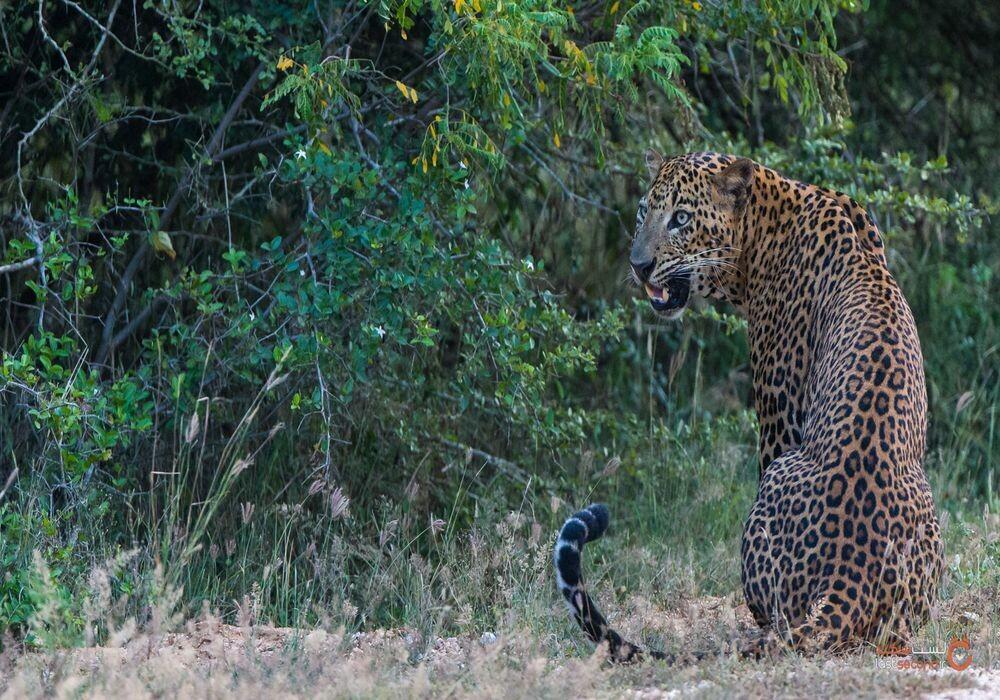 حیات وحش سریلانکا