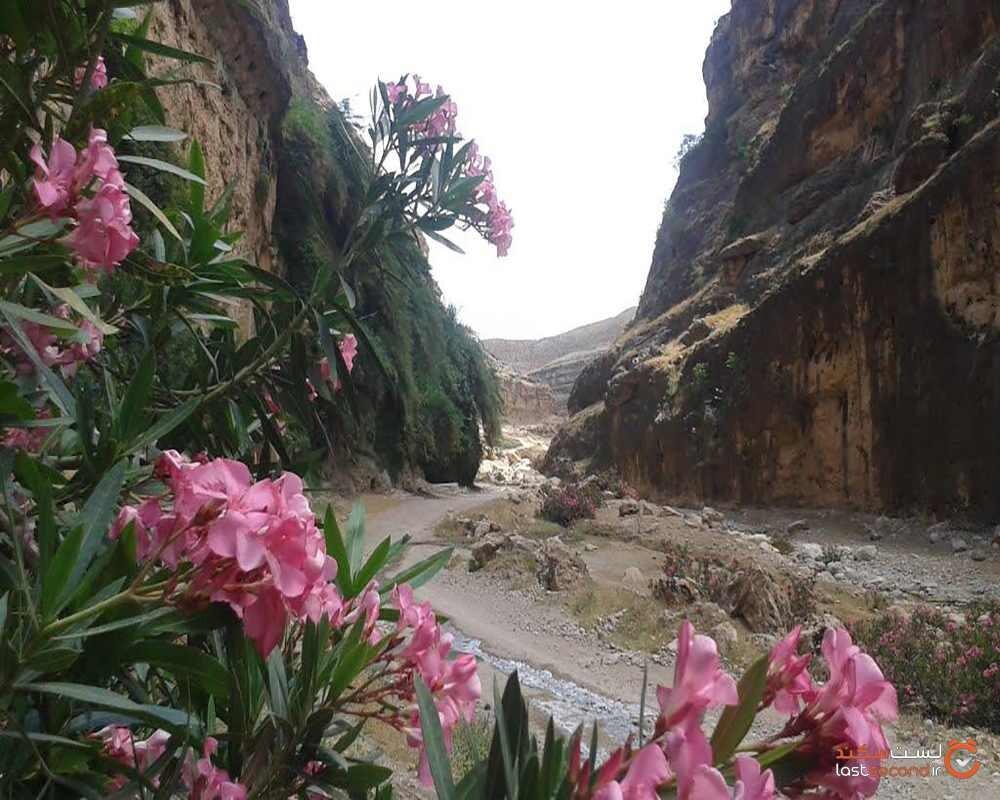دره زرانگوش