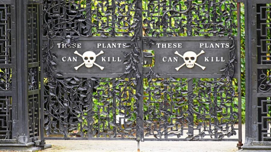 سمی ترین باغ در انگستان، گیاهانی که شما را خواهند کشت!