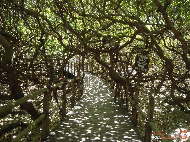 جنگل برزیل