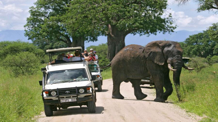 پارک ملی تارانجیر در تانزانیا!