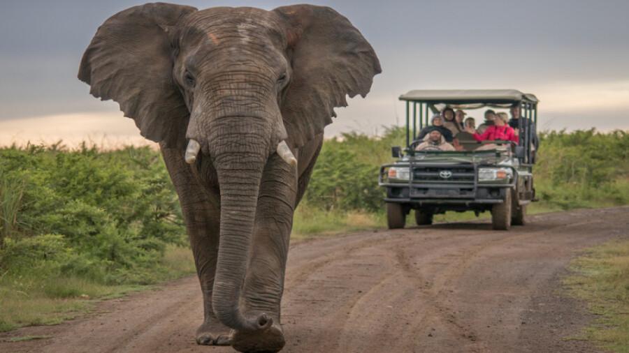 پارک ملی آدو الفنت در آفریقای جنوبی