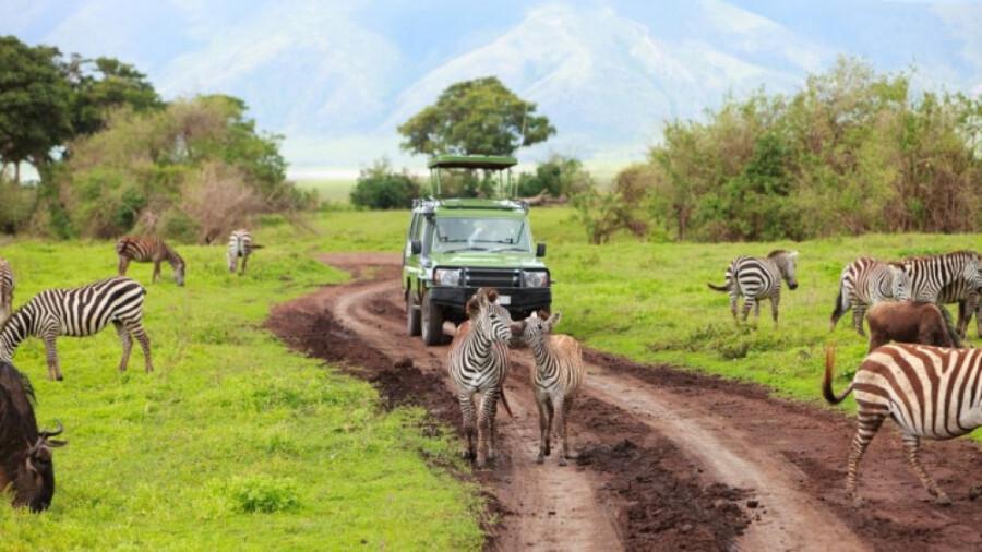 گردش در پارک ملی سرنگتی (Serengeti)
