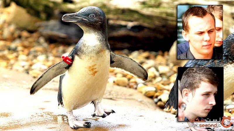 دزدیدن پنگوئن