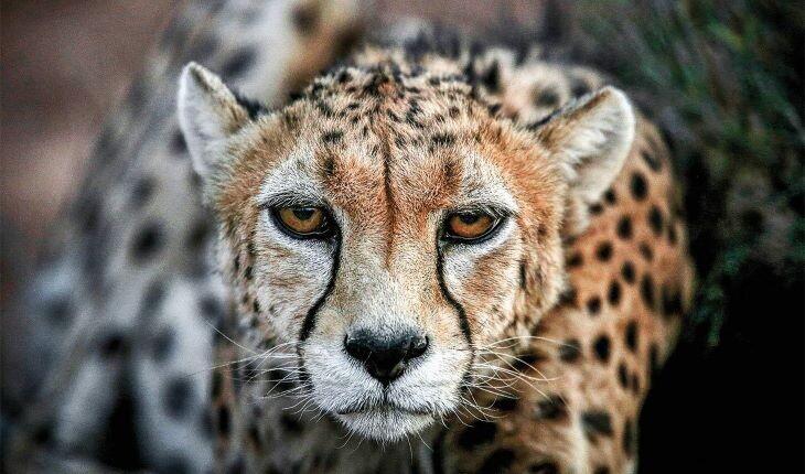 با حیوانات بومی ایرانی آشنا شوید