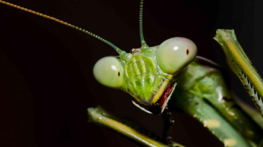 حشرات فضایی با قدرت ماورایی!