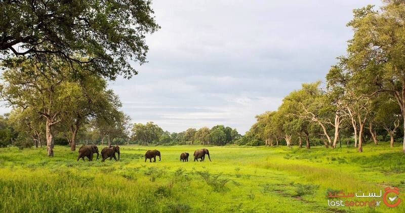 south luangwa national park.jpg