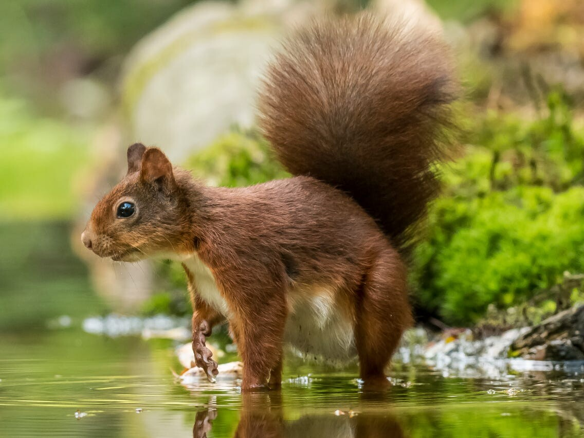 با باهوشترین حیوانات جهان آشنا شوید