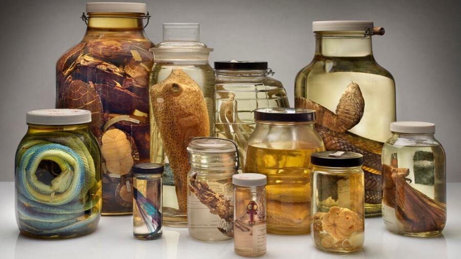 موزه ای که میلیون ها جانور مرده در آن نگهداری می شوند!