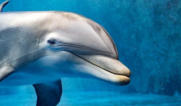 17 دانستنی جالب از دلفینها