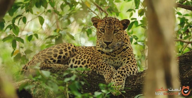 حیوانات سریلانکا