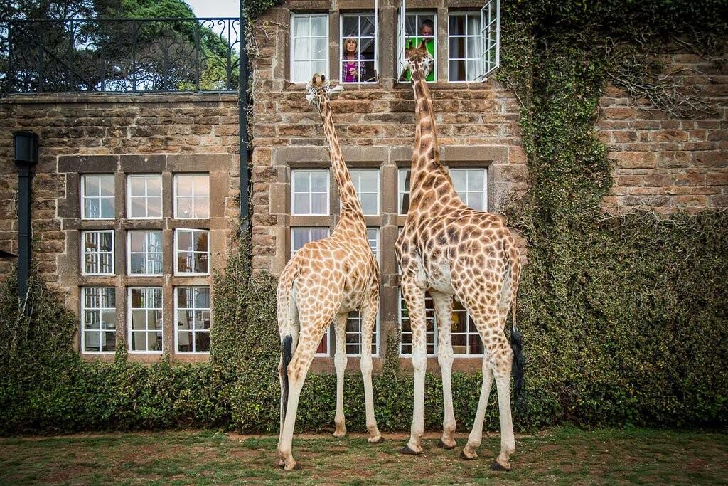 feeding-giraffe-from.jpg