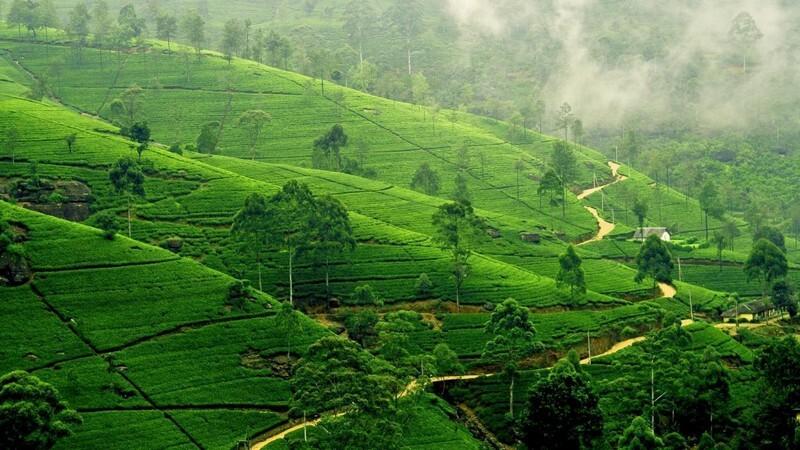 7 جاذبه طبیعی سریلانکا با مناظری فراموش نشدنی!