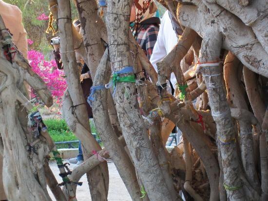 5 درخت مقدّس در فرهنگ ایرانیان؛ سدر، سرو، انار، خرما، انجیر