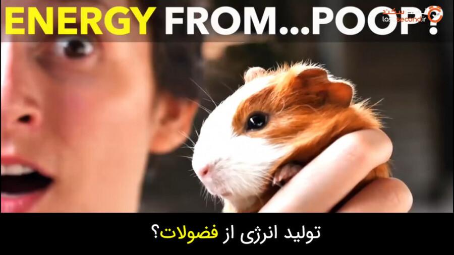 تولید انرژی برق و گاز از فضولات خوکچه هندی!