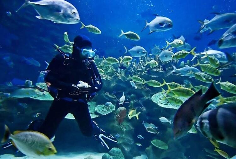گردشگری غواصی چیست؟ بهترین مقاصد غواصی در ایران و جهان