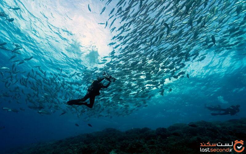 Tubbataha-Reefs-Natural-Park.jpg