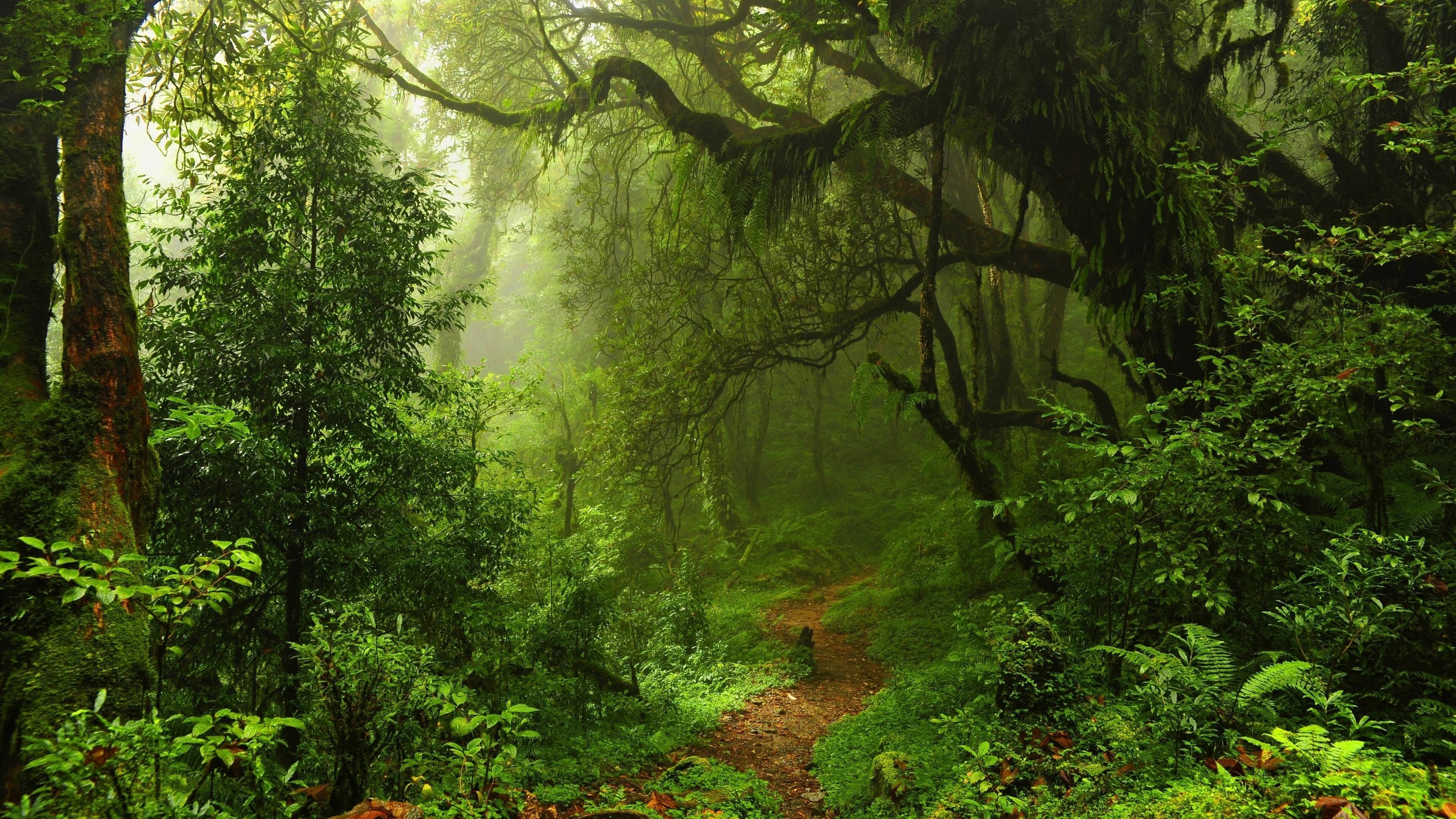 جنگلهای فنگ شویی بزرگترین امید چین برای حذف دیاکسیدکربن