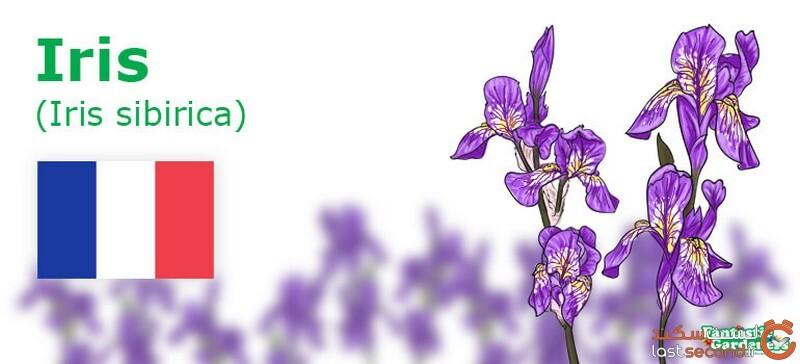 معانی گل ها