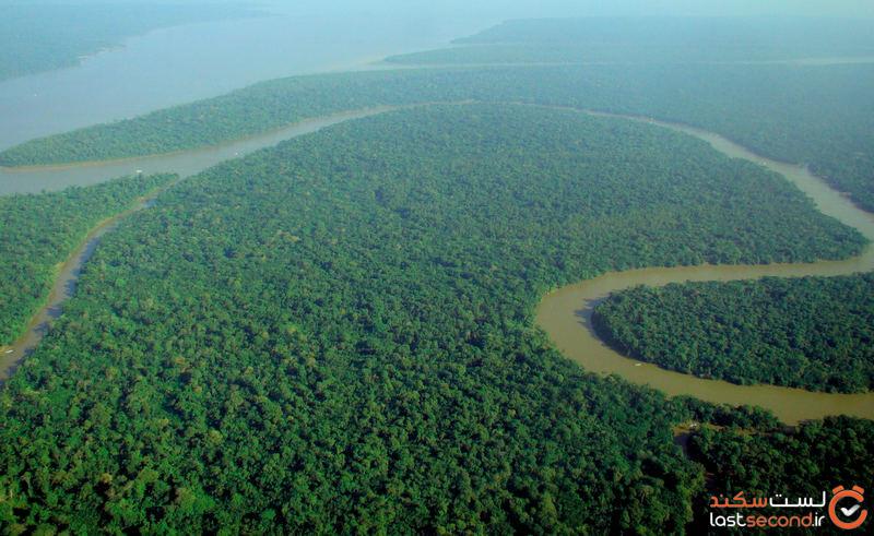 جنگلهای آمازون
