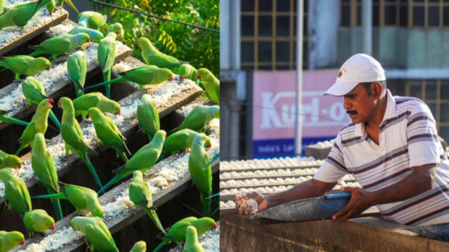 این مرد هندی هر روز به شش هزار پرنده غذا می دهد!