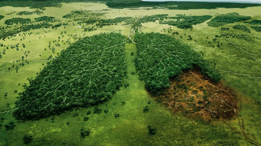 تایم لپسی تاسف آور از نابودی جنگل ها توسط ما انسان ها در 40 سال !