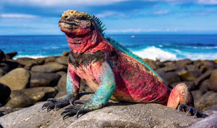 گالاپاگوس، سرزمینی که حیوانات در آن فرمانروایی میکنند