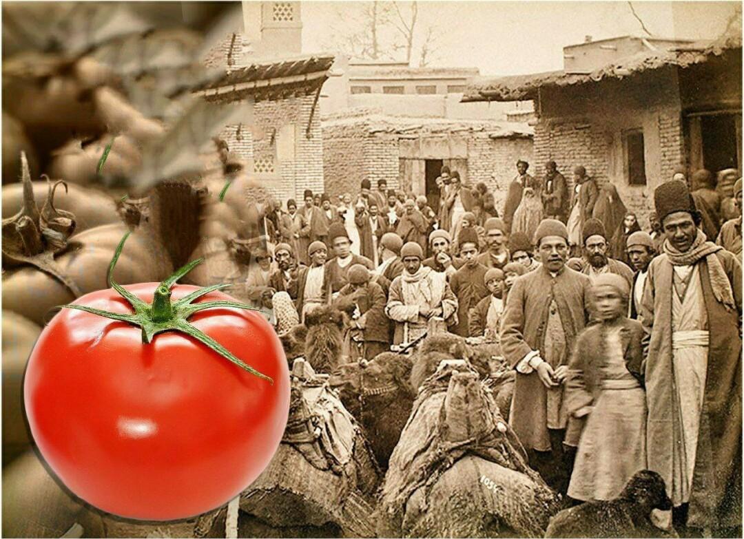 تاریخچه گوجه فرنگی در ایران و جهان