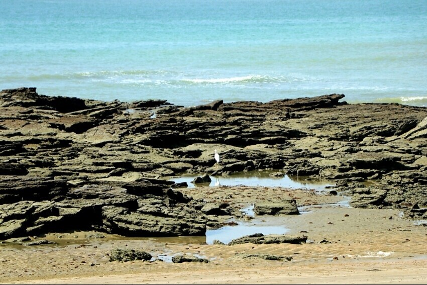 ساحل خرچنگ ها