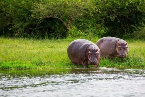تور اوگاندا ( کامپالا + پارک ملی کوئین الیزابت + دریاچه بونیونی + جینجا) 29 تیر 1400 (9 شب)