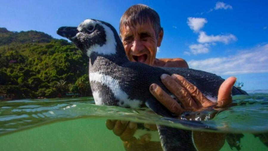 پنگوئنی که برای دیدن صاحبش هر سال هشت هزار کیلومتر را شنا می کند!