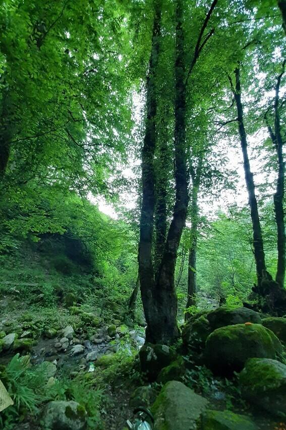 جنگل تیله کنار