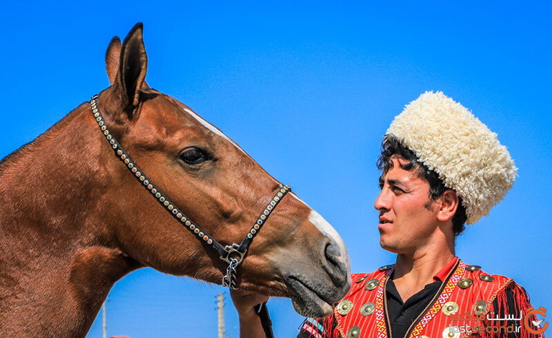 اسبهای ترکمنی
