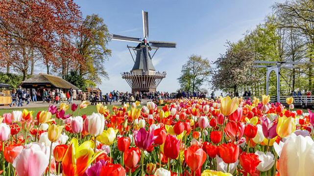 آمستردام و باغ گل ها (سفرنامه آمستردام)