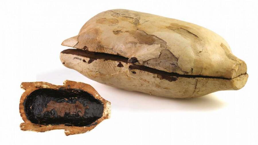 کشف عجیب در مقبره توت عنخ آمون، غذاهایی برای بعد از مرگ!