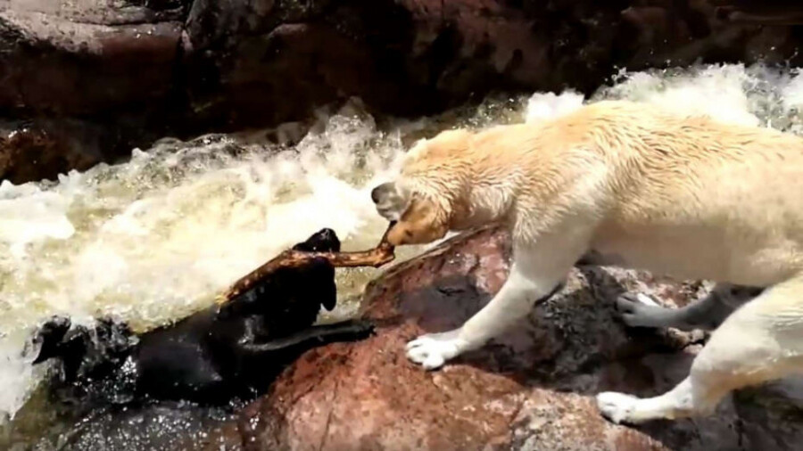 چند صحنه از نجات یک حیوان از مرگ توسط حیوانی دیگر!