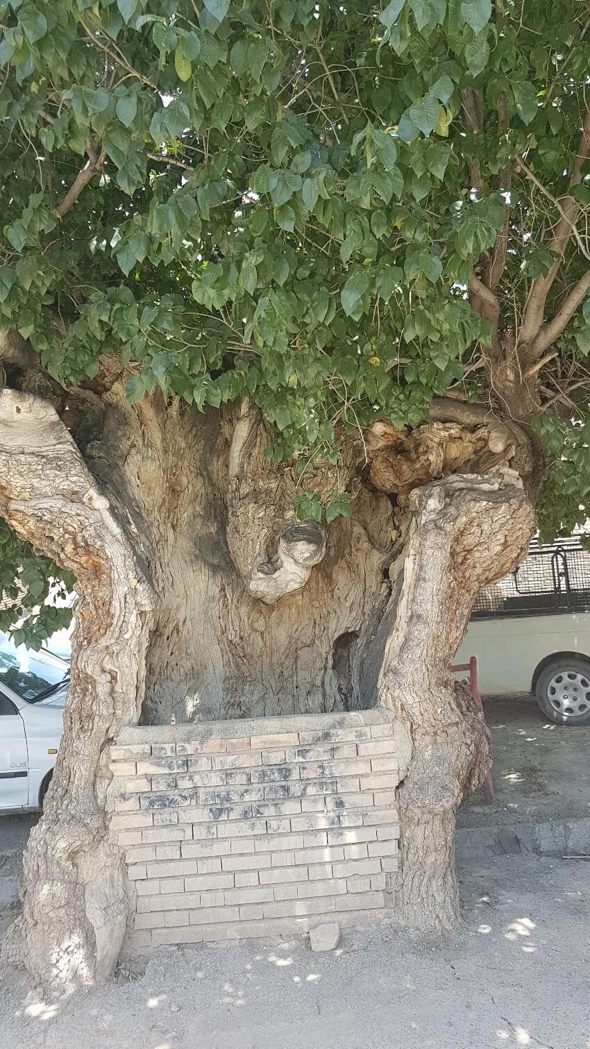 Naroun Tree