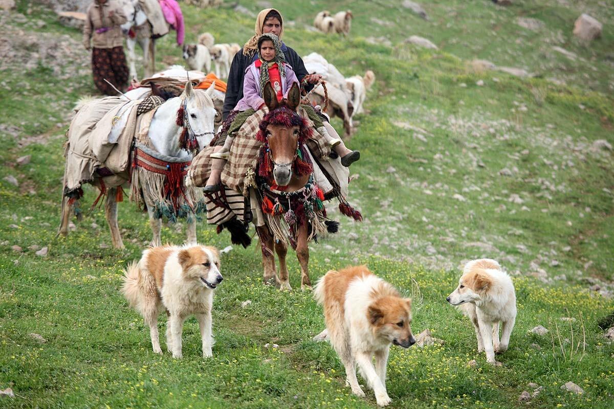 سگ در فرهنگ و باورهای مردم ایران چه جایگاهی دارد؟