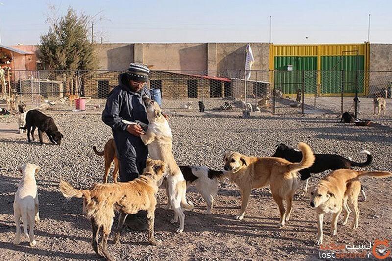 سگ در ادیان ایرانیها