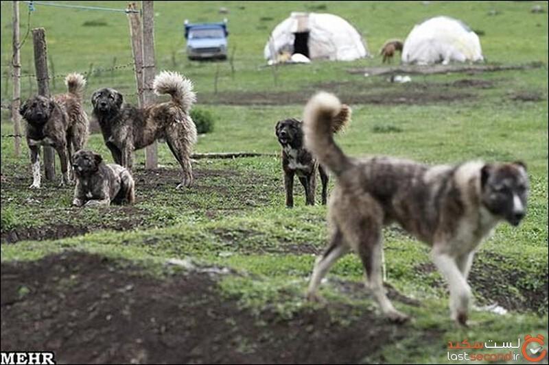 سگ در ادبیات ایران