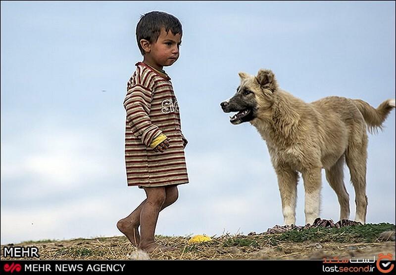 سگ در ایران