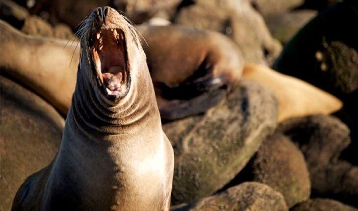 10 جانوری که عجیب ترین صداها را دارند