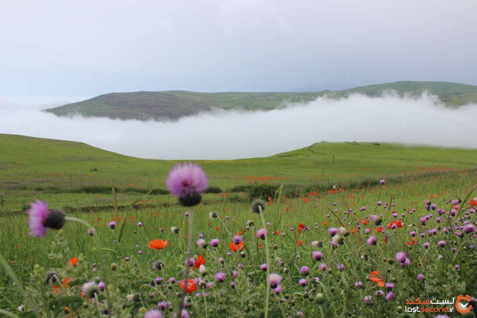 گل ها و مه.jpg
