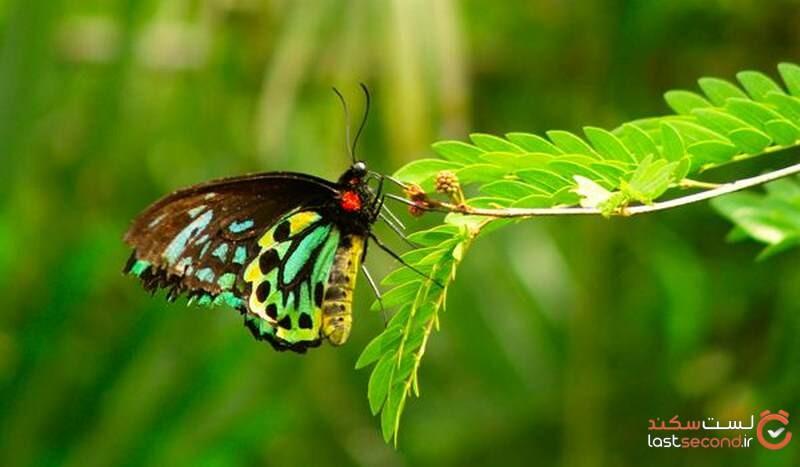عکس انواع پروانه ها