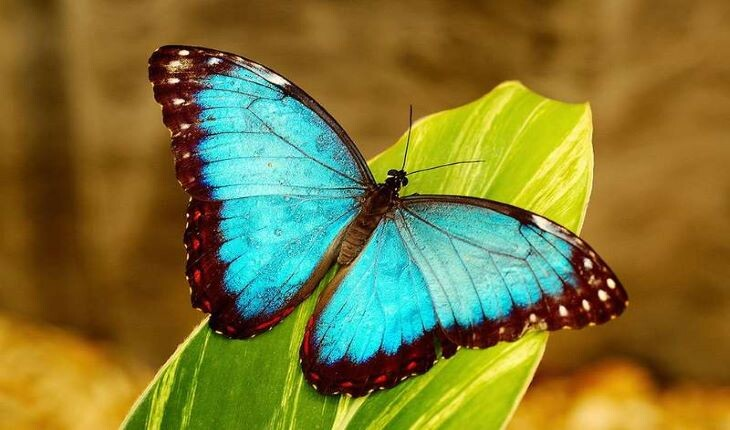 عکس هایی از زیباترین پروانه های دنیا
