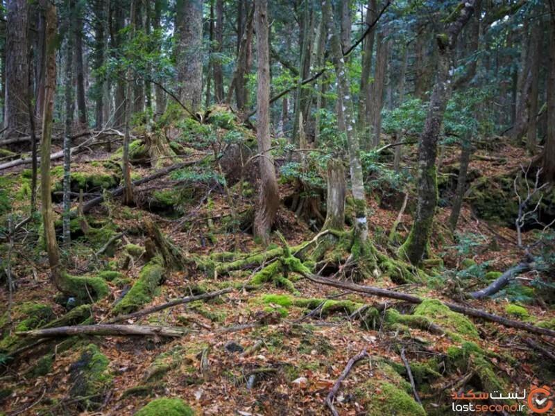 ترسناک ترین جنگل