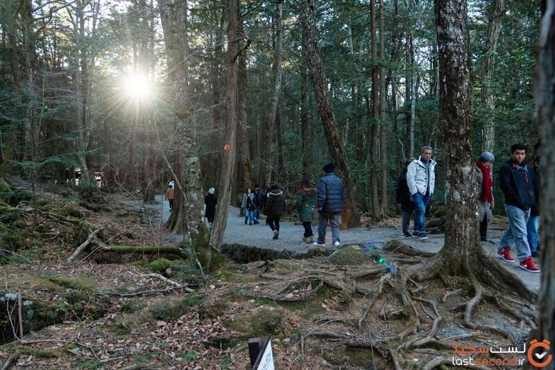 جنگل خودکشی در ژاپن
