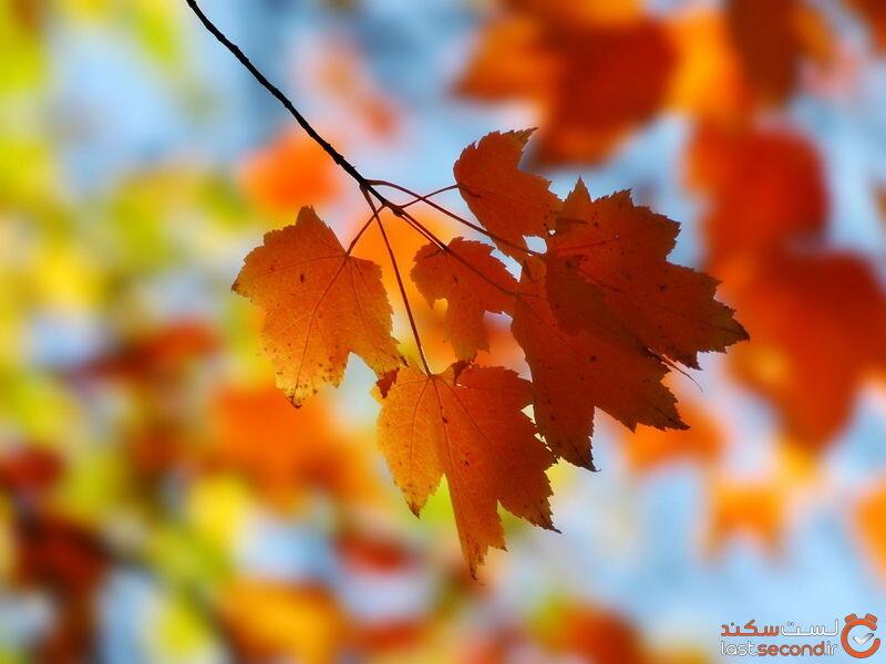 دانلود عکس پاییزی